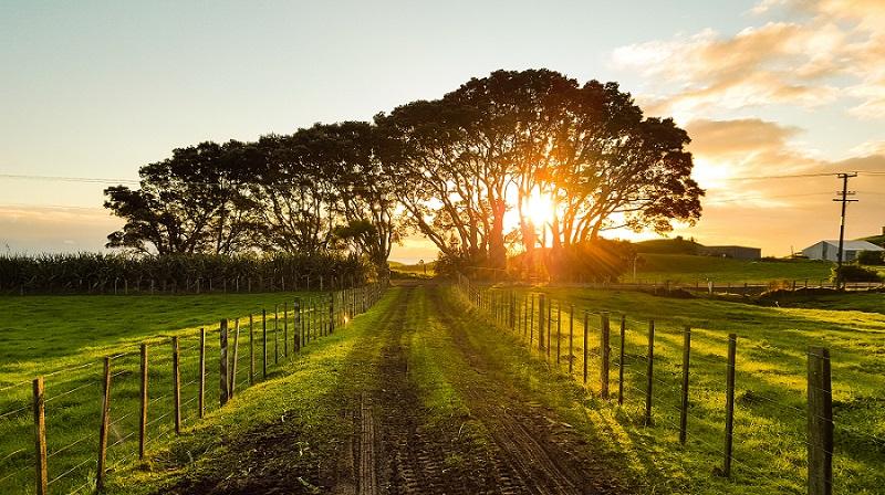Wonen op het platteland: dit zijn de voor- en nadelen